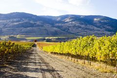 Oliver Okanagan Valley Vineyard British Columbia. Scenic autumn view of the rural landscape and vineyards of Oliver located in the Okanagan Valley of British Stock Photos