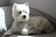 Oliver profile Royalty Free Stock Photo