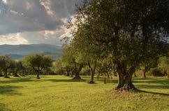 Oliveraies dans le chianti dans un beau jour en automne, Toscane photographie stock