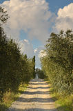 Oliveraies dans le chianti dans un beau jour en automne, Toscane photos stock