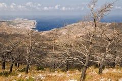 Olivers und Kiefern schwärzten durch ein Feuer nahe dem Dorf von Mesochori, Karapathos-Insel stockfotografie