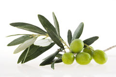 Olives. On branch with leaves Stock Photography