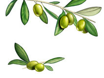 Olives. Several olives on a branch. Digital illustration, clipping path included Stock Photography