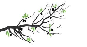 Olives. Stylized Olive tree branch with olives and leaves. Also in vector format Stock Photos