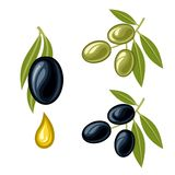 Olives. A set of olives for decoration Stock Image