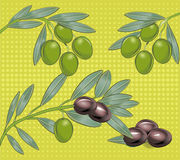 Olives. Several olives on a branch Stock Photography