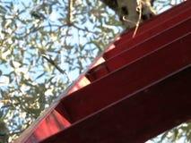 Olives11 video estoque