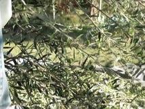 Olives9 filme