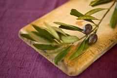 Olives. Close up on black olives on branch Stock Image