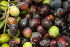 Olives. Group of black and green olives Stock Image