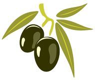 Olives. Stylized olives isolated on a white background Royalty Free Stock Photography