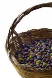 Olives in basket. Detail of freshly picked organic olives in a traditional sardinian handmade reed basket, shallow DoF, focus on the olves, isolated on white Stock Photography