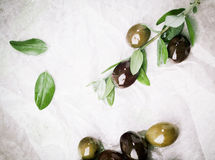 Olives being prepared for culinary use Royalty Free Stock Image