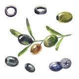 Olives, black olives. In watercolor Royalty Free Stock Photo