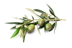 Olives on branch with leaves Royalty Free Stock Image