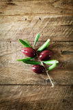 Olives on branch Stock Images