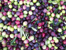Olives close up Royalty Free Stock Images