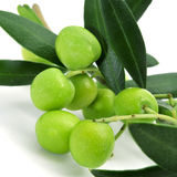 Olives. Closeup of a branch of olive tree with olives on a white background Royalty Free Stock Photography