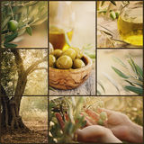 Olives collage Royalty Free Stock Photography