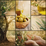 Olives collage Stock Images