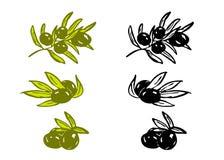 Olives de dessin Photo stock