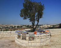 olives de support Photos libres de droits