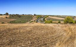 Olives fields near highway Royalty Free Stock Images