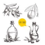 Olives fruit, branch, tree and olive oil bottle sketches set. Hand drawn vector illustrations. Isolated on white background Stock Photo
