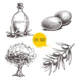 Olives fruits, branch, tree and olive oil bottle sketches set. Hand drawn vector illustrations. Isolated on white background Royalty Free Stock Images