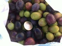 Olives fruits Stock Photography