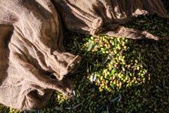 Olives Stock Photos