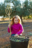 Olives harvest farmer kid girl picking Stock Images