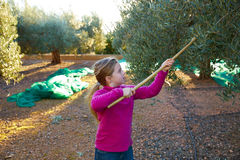 Olives harvest farmer kid girl picking Royalty Free Stock Photo