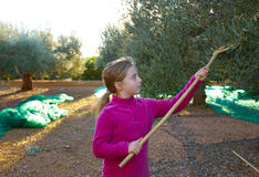 Olives harvest farmer kid girl picking Royalty Free Stock Image