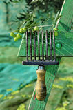 Olives harvesting. Harvesting olives in an olive grove in Catalonia, Spain Royalty Free Stock Photography
