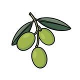 Olives illustration Stock Photos