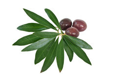 Olives and leaves Stock Photography