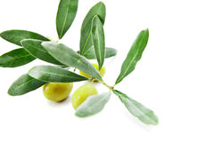 Olives with leaves on branch isolated over white Royalty Free Stock Photos