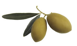 Olives and leaves. Pair of olive on a white background Stock Images