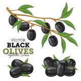 Olives with leaves Stock Photos