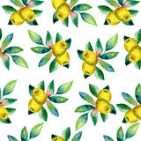 Olives and leaves watercolor painting illustration isolated on white background, Hand drawn seamless pattern, Series Royalty Free Stock Photos
