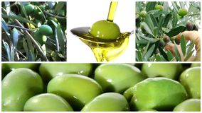 Olives montage stock footage