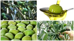 Olives montage stock video footage