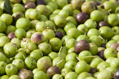 Olives. A multitude of freshly harvested olives Stock Photo