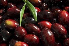 Olives noires Image libre de droits