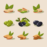 Olives and Nuts Vector Illustration Modern Design Stock Photography