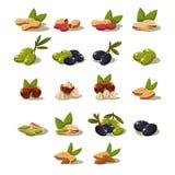 Olives and Nuts, Vector Illustration Modern Design Set Stock Photo