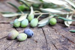Olives and olive branch on old wood. In nature Royalty Free Stock Photography