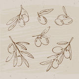 Olives and olive branches. Hand drawn olives, vector sketch in vintage style Royalty Free Stock Photography
