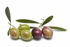 Olives and olive leaves. Royalty Free Stock Images